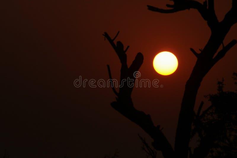 Fotografia do por do sol dentro dos treess fotos de stock royalty free