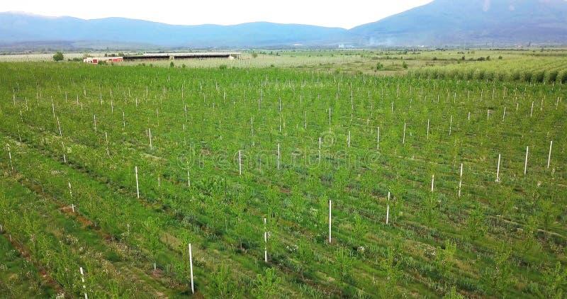 a fotografia do zangão, vista aérea dos pomares resen dentro, prespa, Macedônia fotos de stock royalty free