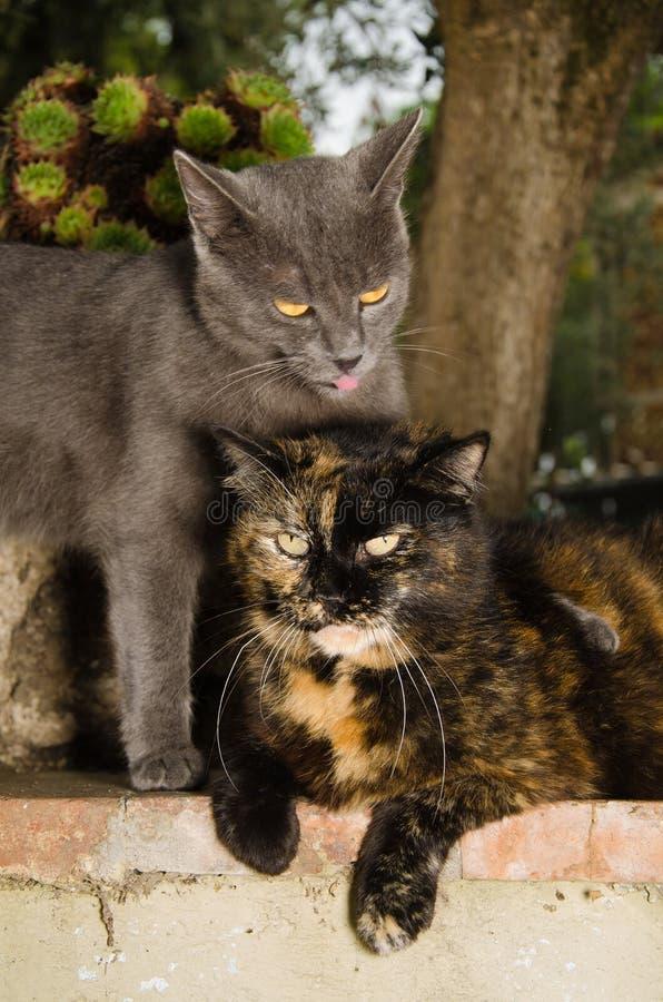 Fotografia dwa kota w miłości obraz stock