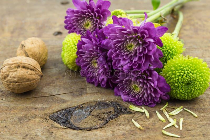 Fotografia dwa orzechów włoskich, zieleni i purpur chryzantemy na drewnie ta, obraz stock