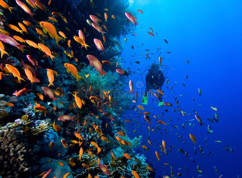 Fotografia koralowa kolonia zdjęcie stock
