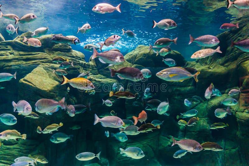 Fotografia koralowa kolonia, Czerwony morze, Egipt zdjęcia stock
