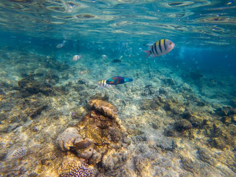 Fotografia koralowa kolonia na rafie, Egipt zdjęcie royalty free