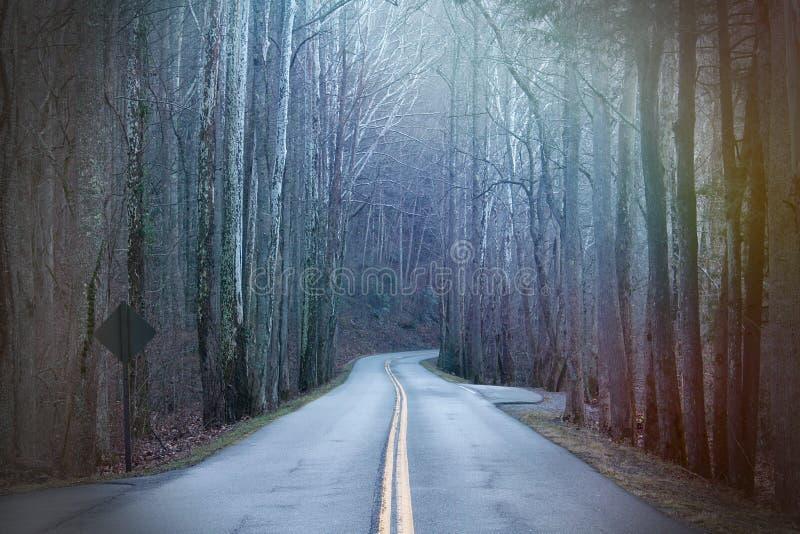 Fotografia lunga della via nel legno profondo con i raggi variopinti della luce del sole immagini stock libere da diritti