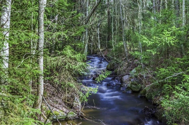 Fotografia lunga di esposizione di scorrimento dell'acqua tramite il canale circondato dagli alberi verdi e dalla bellezza paesag fotografia stock libera da diritti