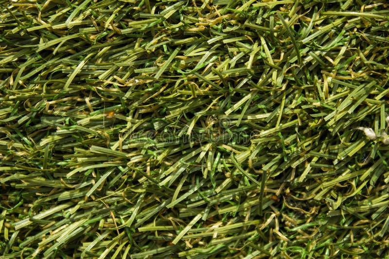 Fotografia macro Textura do gramado do futebol, campo de golfe, gramado aparado fotografia de stock