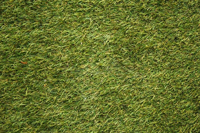 Fotografia macro Textura do gramado do futebol, campo de golfe, gramado aparado fotos de stock