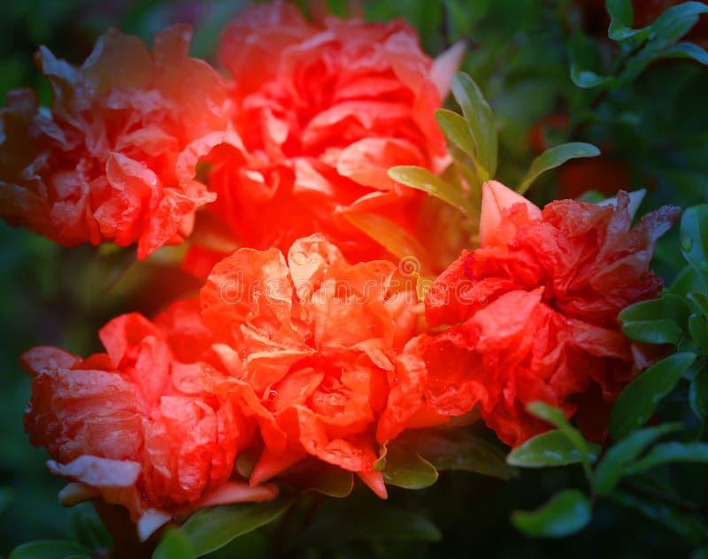Fotografia makro- piękni południowi florets zdjęcia royalty free