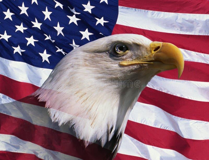 Fotografia montaż: Amerykański łysy orzeł i flaga amerykańska obraz royalty free