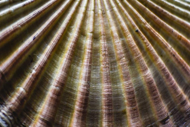 Fotografia morski ślimaczek w muzeum fotografia stock