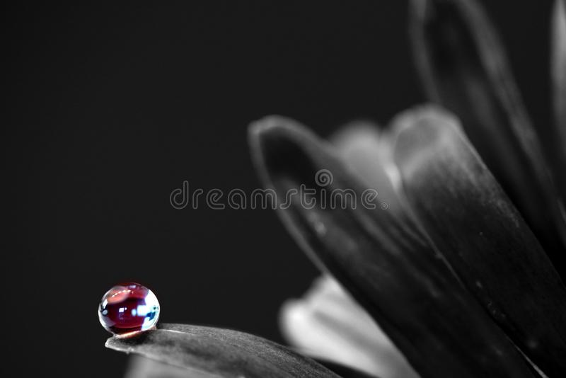 Fotografia nera, in bianco e nero, monocromatica, macrofotografia fotografia stock