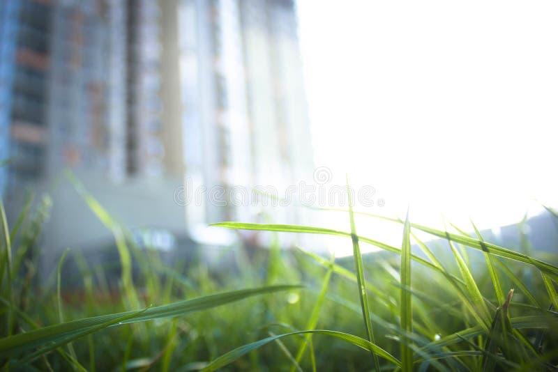 Fotografia nowy budynek w tle zamazuje, w przedpolu tam jest pięknym ostrzem trawa z kroplami mornin obrazy royalty free