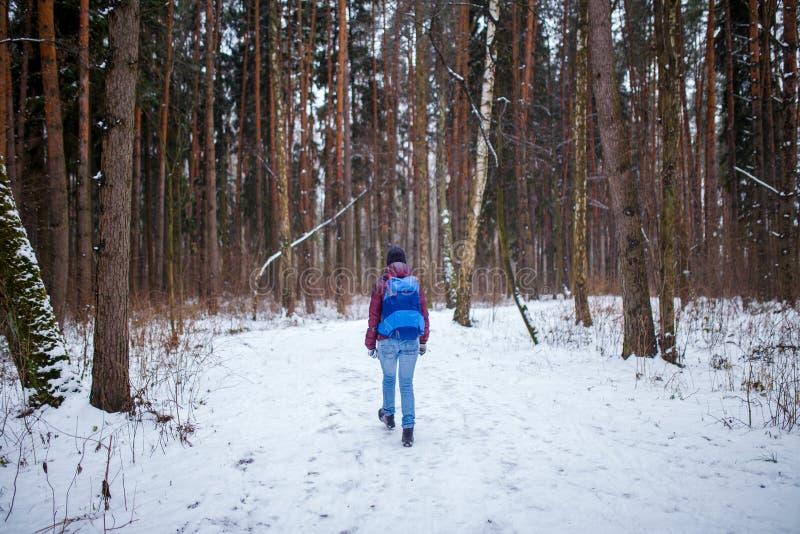 Fotografia od plecy kobieta z plecaka odprowadzeniem przez zima lasu zdjęcia royalty free