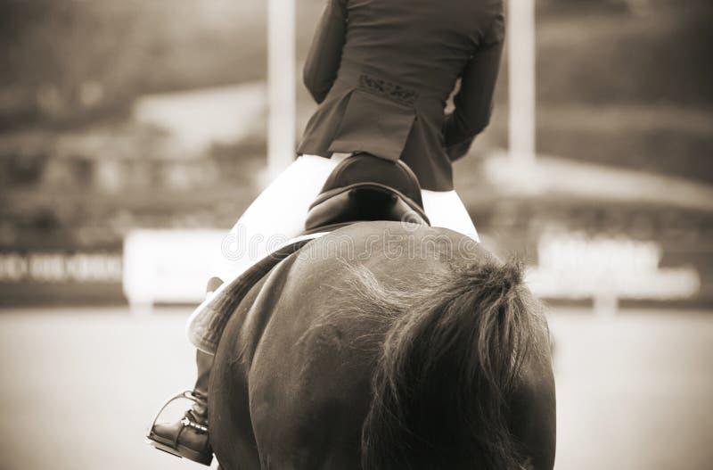 Fotografia od plecy o jeźdza doskakiwaniu na koniu zdjęcie stock