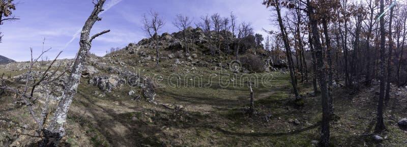 Fotografia panorâmico na entrada à floresta onde o arvoredo começa com suas árvores e um monte que o proteja foto de stock