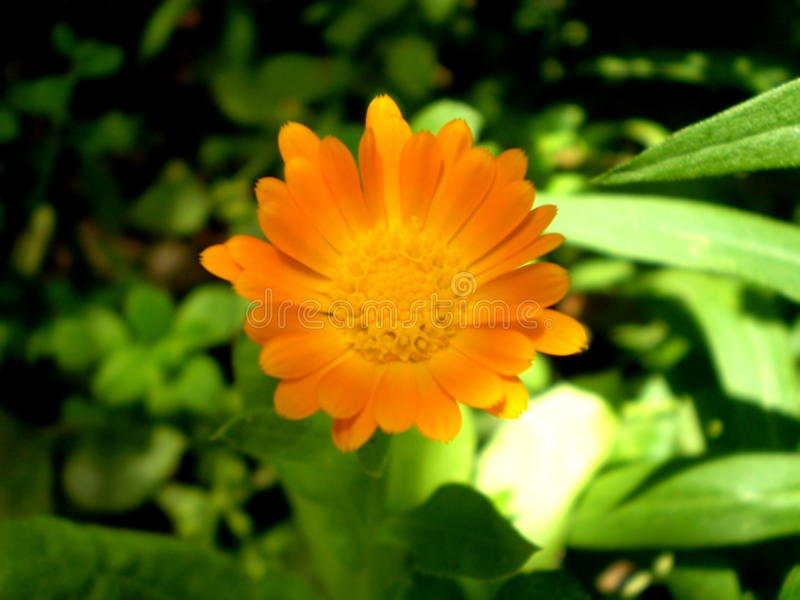 Fotografia pomarańczowy kwiat na zamazanym zieleni i czerni backgrou obraz royalty free