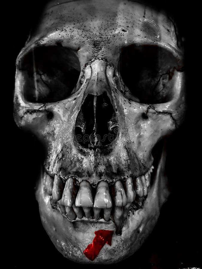 Fotografia preto e branco ótimo do crânio humano, retrato assustador da morte fotos de stock