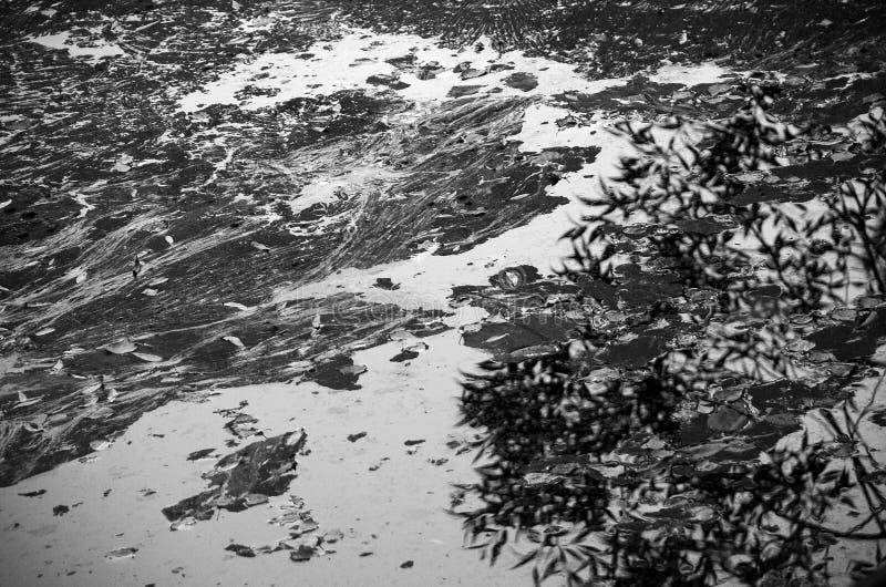 Fotografia preto e branco artística das folhas de outono secas na superfície lisa da água foto de stock