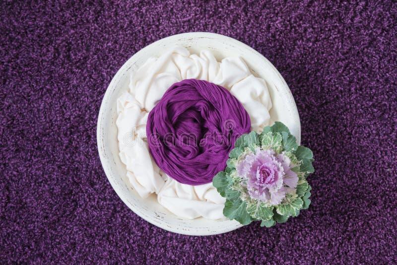 Fotografia recém-nascida apóia tigela de madeira branca com repolho decorativo sobre fundo roxo fotos de stock royalty free