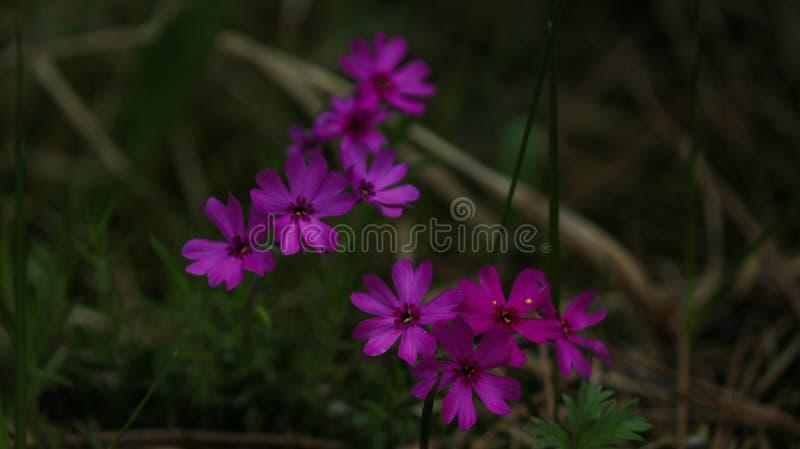 Fotografia rilegata della natura presa da Eric Fabian immagine stock