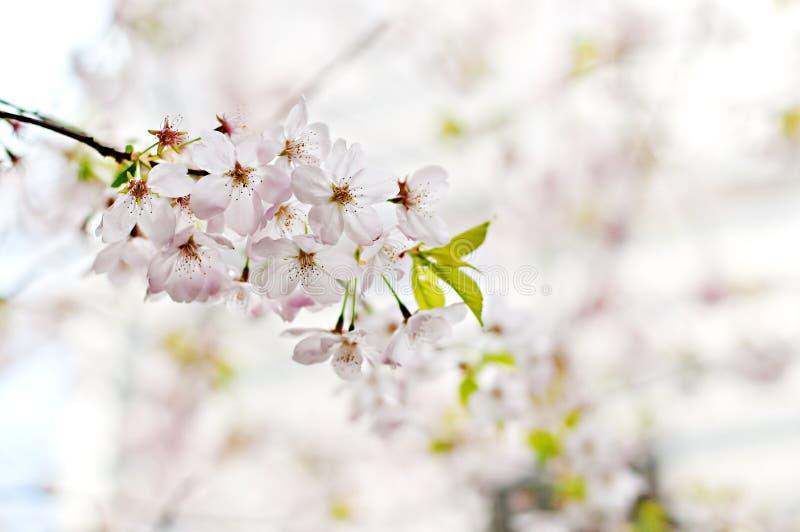 Fotografia Seletiva Da Flor Petaled Do Branco 5 Domínio Público Cc0 Imagem