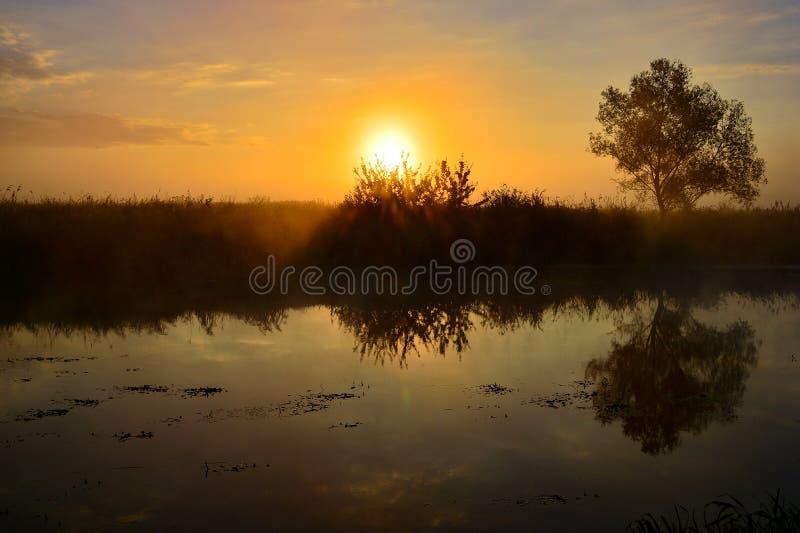 Fotografia z lato wschodem słońca rzeką i drzewem obrazy royalty free