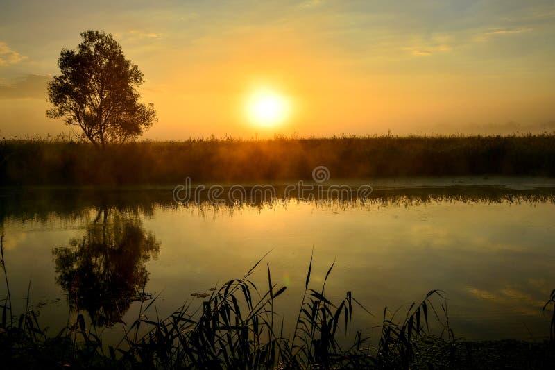 Fotografia z lato wschodem słońca rzeką i drzewem fotografia royalty free