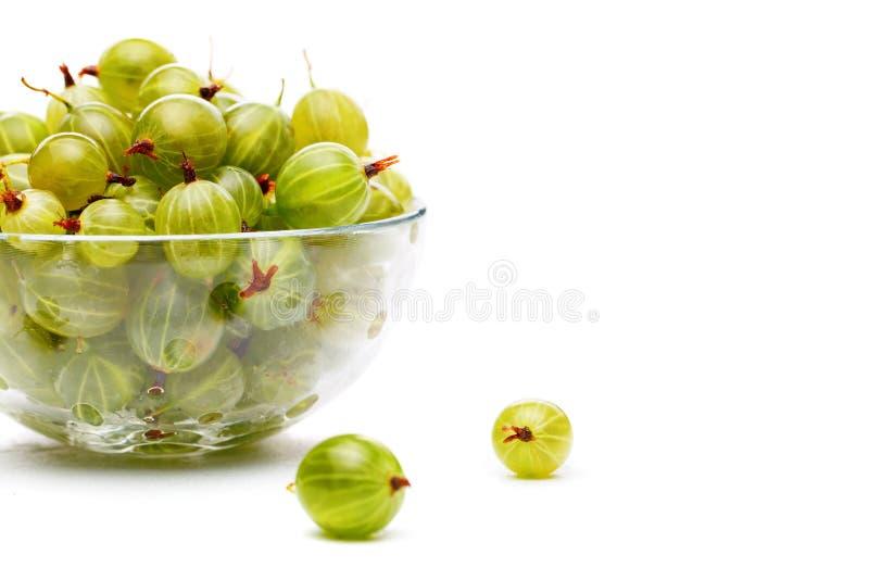 Fotografia zielony agrest w szklanej filiżance na pustym białym tle fotografia royalty free