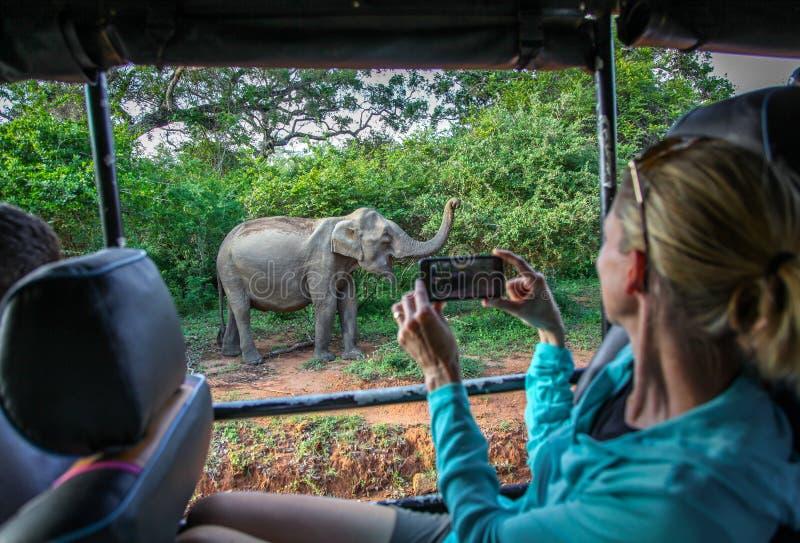 Fotografiando los elefantes pasan en safari en el parque nacional de Yala foto de archivo