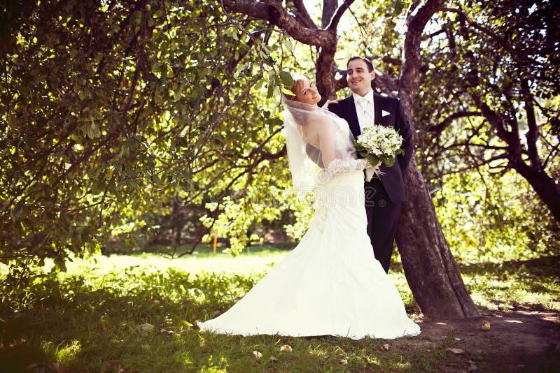 fotografibröllop royaltyfri foto