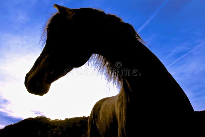 Fotografie eines Pferds gegen das Licht stockbilder