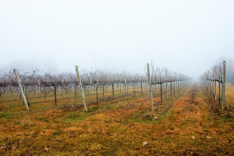 Fotografie eines Tages des Nebels Der Nebel hat seinen eigenen Charme stockfoto