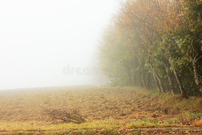 Fotografie eines Tages des Nebels Der Nebel hat seinen eigenen Charme lizenzfreie stockfotos