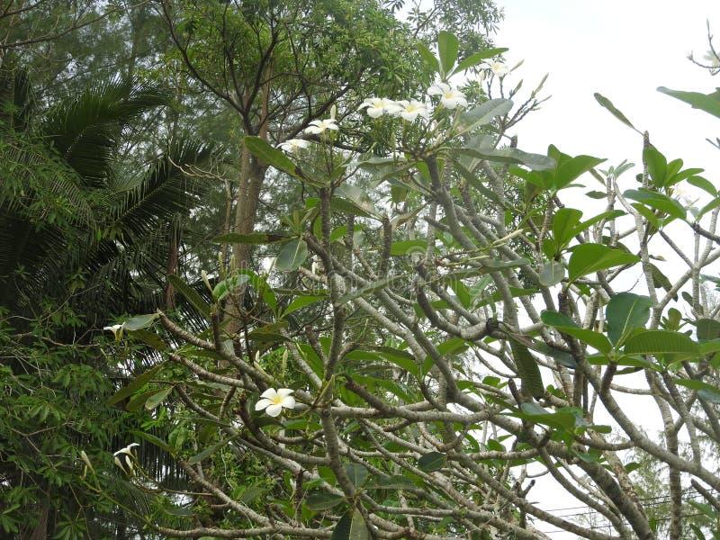 Fotografie kwiaty na tle Zielony plan środek zwrotniki zdjęcia stock