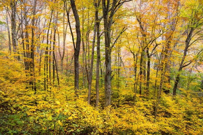 Fotografie van de Aard van de Bomen van het Gebladerte van de Daling NC van de herfst de Bos Westelijke Toneel stock afbeelding
