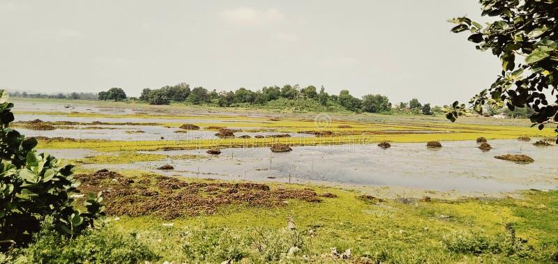 Fotografie van kleuren volledig klein mooi die beeld uit de bank van de rivier wordt genomen royalty-vrije stock afbeelding