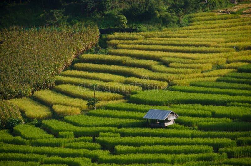 Fotografiert auf Bali lizenzfreie stockbilder