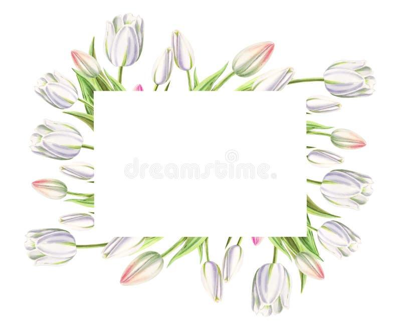 Fotografii i teksta rama od pięknych białych tulipanów Markiera rysunek adobe korekcj wysokiego obrazu photoshop ilo?ci obraz cyf obrazy stock