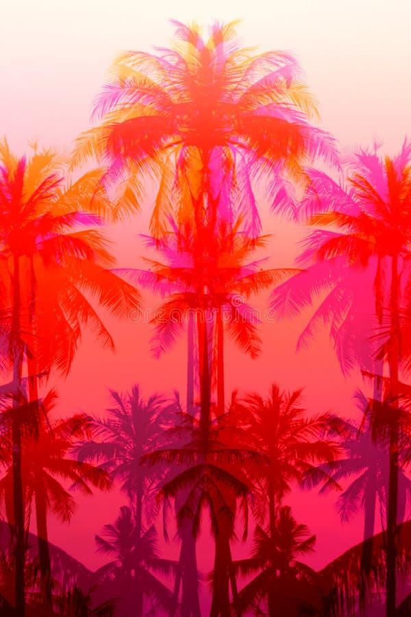 Fotografii tło egzotyczni piękni drzewka palmowe obraz stock