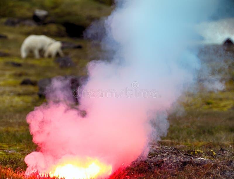 Fotografo attaccato dell'orso polare immagini stock libere da diritti