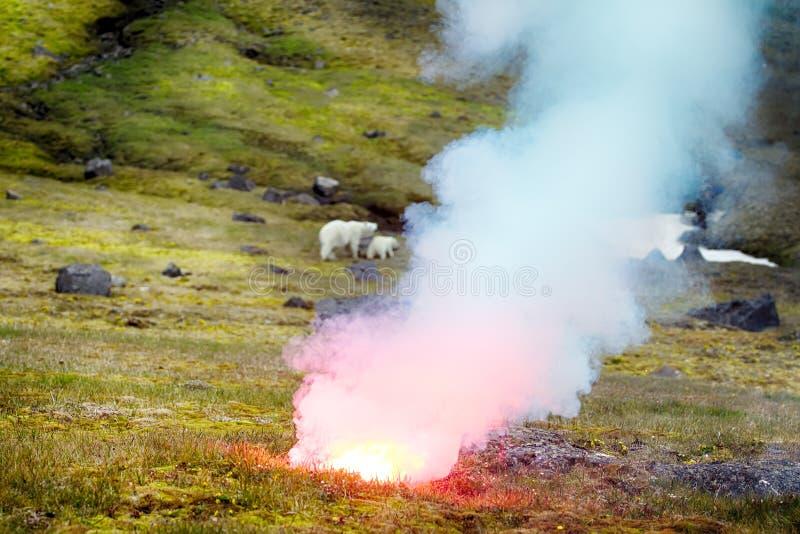 Fotografo attaccato dell'orso polare immagine stock libera da diritti