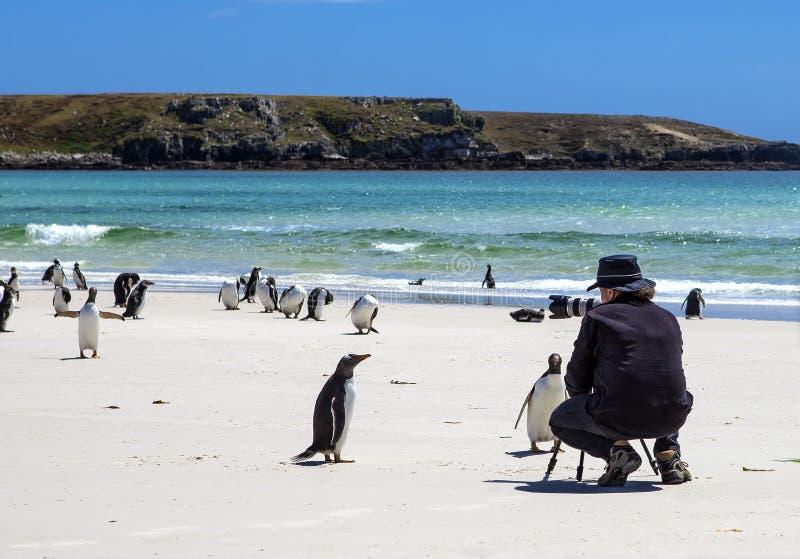Fotografo con i pinguini a Malvinas Islands-3 fotografia stock libera da diritti