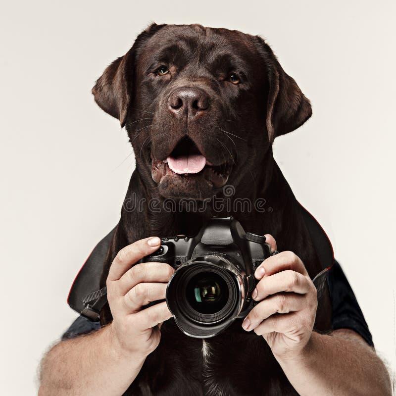 Fotografo del cane che prende le immagini Isolato su priorità bassa bianca immagine stock