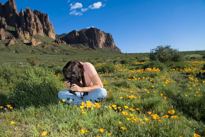 Fotografo del Wildflower fotografie stock libere da diritti