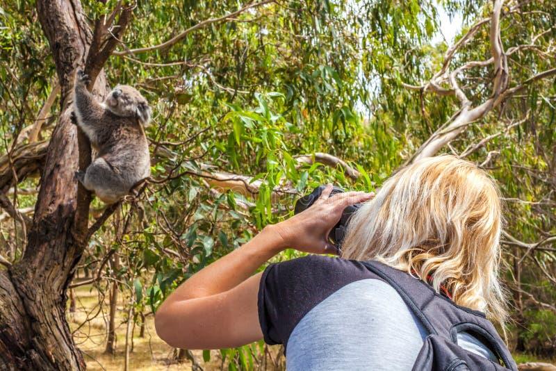 Fotografo della donna della fauna selvatica fotografie stock