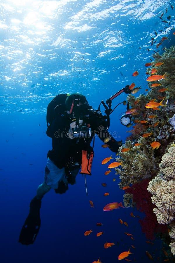 Fotografo subacqueo immagini stock libere da diritti