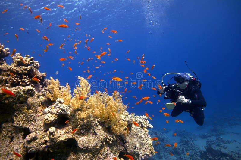 Fotografo subacqueo in acqua blu con il pesce variopinto fotografia stock