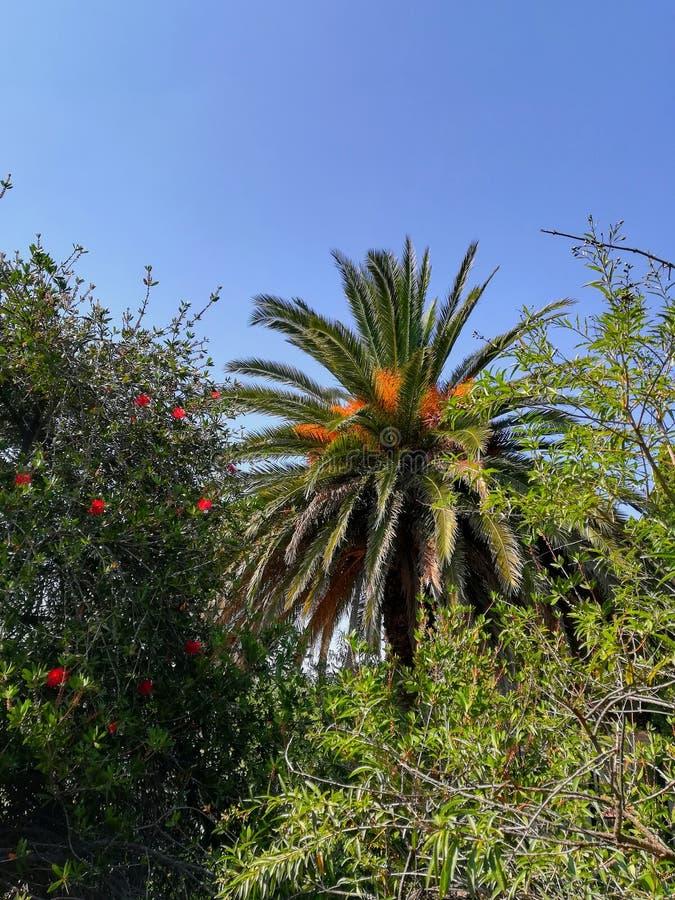 Fotographie eingelassene Mittelmeerinsel Korsika stockfotos