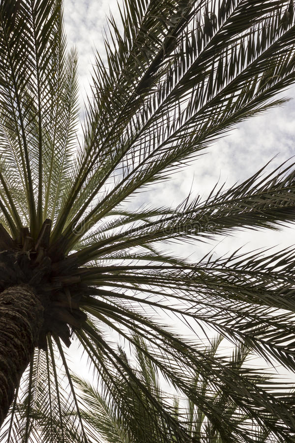 Fotographie eingelassene Mittelmeerinsel Korsika lizenzfreie stockfotos