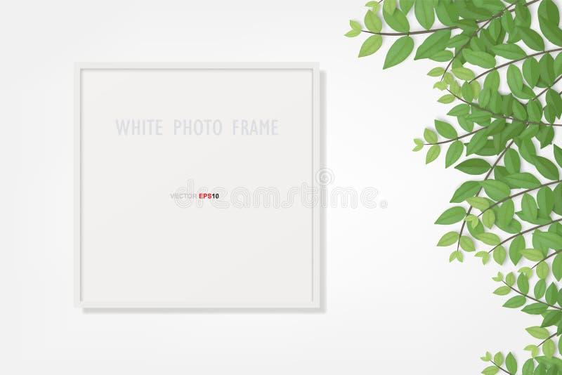 Fotorahmen oder Bilderrahmenhintergrund mit Niederlassungsgrünblatt lizenzfreie abbildung
